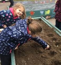Garden Project 2019